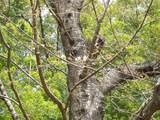 後楽園の桜 標準木 2007.3.28