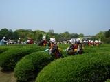 岡山後楽園の茶畑より望む延養亭 2008.5.18