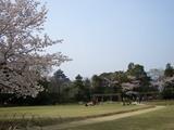 桜彩る岡山城 @ 後楽園 2008.4.6