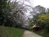 後楽園内の標準木 2007.4.3