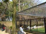 後楽園の桜 標準木は鶴の先