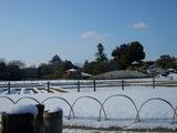 雪景色と岡山城 2008.2.24