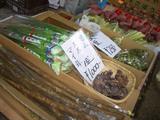 京橋朝市の野菜たち