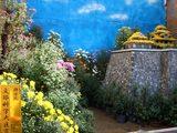 おかやま菊花大会の菊盆景