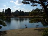 岡山城を背に 鶴の優雅なお正月