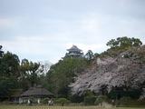 後楽園&岡山城 2007.4.3