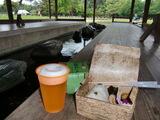 後楽園の茶畑の茶葉 de 「茶飯おにぎり」 2009.5.17