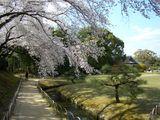 後楽園内は9分咲き 2007.4.5