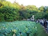 観蓮節、花葉の池(かようのいけ)に集合!! 2008.7.20