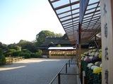 後楽園菊花大会の大菊花壇と延養亭 2008.10.28