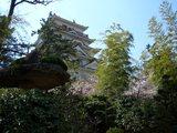 桜彩る福山城(広島県福山市) 2008.4.3