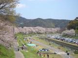 後楽園 東側の河川敷 2007.4.5