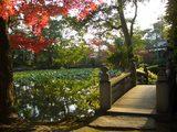 東湖園の神橋(石橋)と紅葉