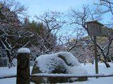 中村憲吉歌碑(岡山後楽園の梅林) 2008.2.24