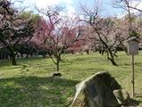 中村憲吉歌碑 @ 岡山後楽園 紅白梅林 2009.3.2