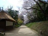 後楽園内の標準木 2007.4.5