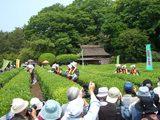 岡山後楽園の「茶つみ祭」 2008.5.18