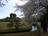 桜&唯心山 2007.4.3