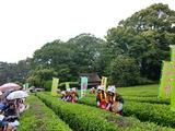「海田茶摘み踊り保存会」 茶摘み娘さん 2009.5.17