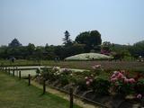 牡丹と蓮華と躑躅燃ゆ、岡山後楽園 2008.4.29
