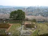 桜と新幹線の巡り逢い