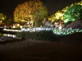 曲水と、鶴細工が施された茶庭型石灯篭 2008.7.29