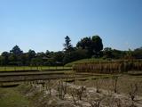後楽園の稲干し風景と岡山城