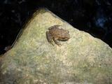 後楽園の蛙