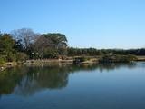 沢の池(岡山後楽園)の連鶴