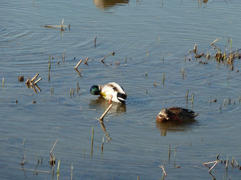 冬の佐鳴湖5