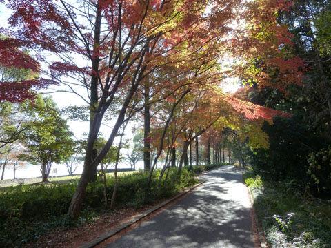 冬の佐鳴湖
