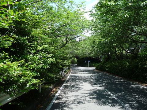 夏の日差しの佐鳴湖2