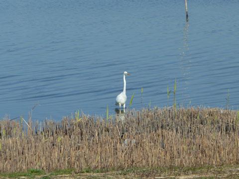 冬の佐鳴湖10