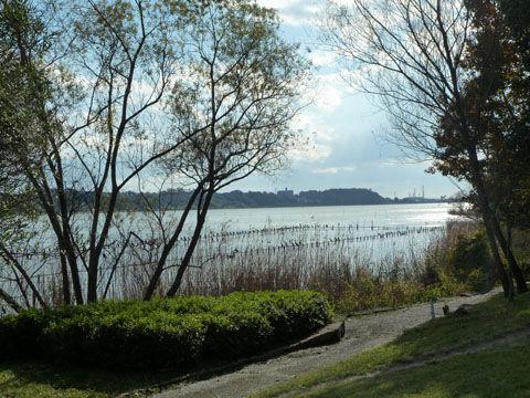 冬の佐鳴湖11