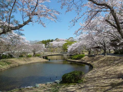 2011フラワーパーク・桜-9