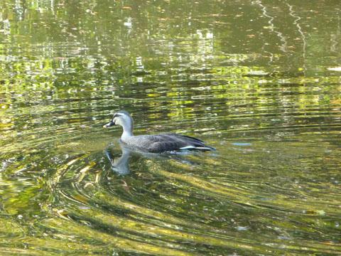 冬の佐鳴湖8