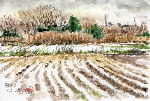17初雪の畑560_1
