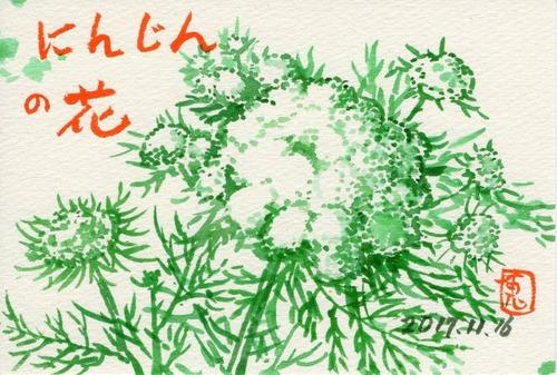 17にんじんの花533_1