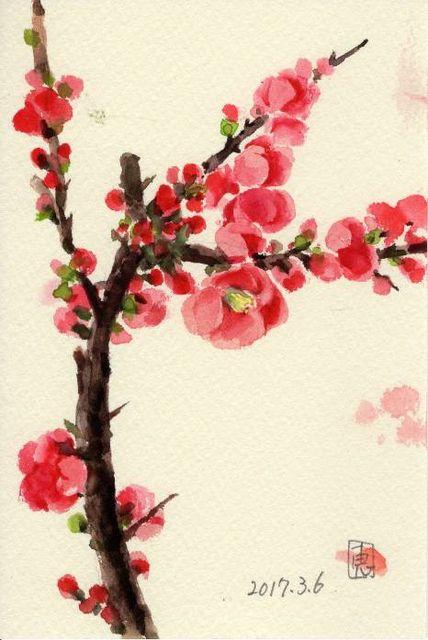 17木瓜の花226_1