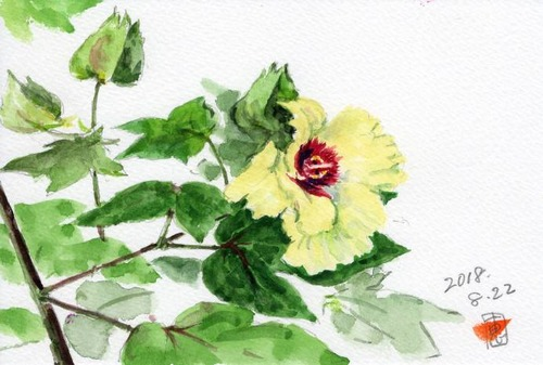 18棉の花752_1