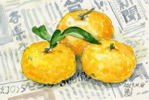 17柚子536_1