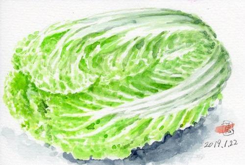 19白菜882_1