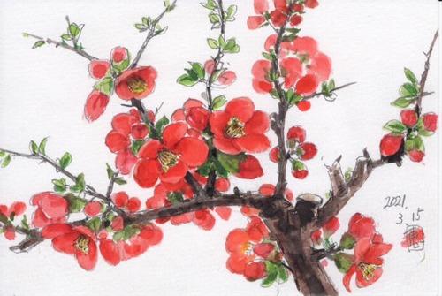 21木瓜の花_1