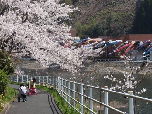 鯉のぼり・三休公園