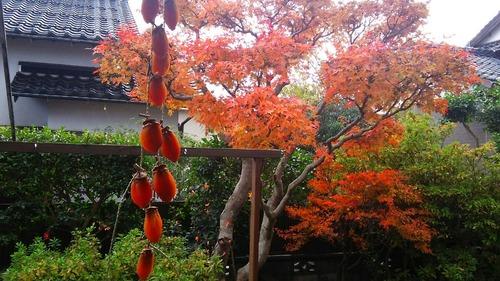 庭の紅葉②