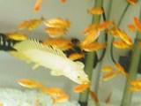白ラプ遊泳