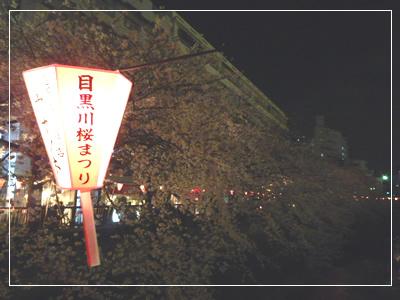 桜 in 中目黒