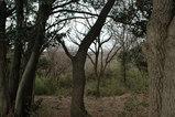 台峯の木々