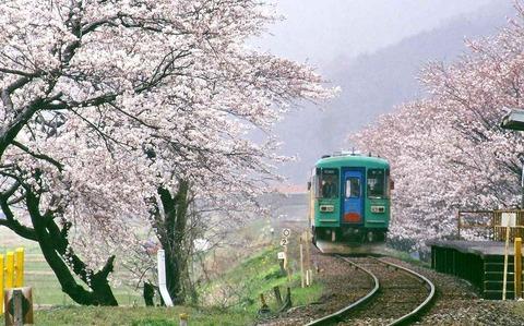 s-春、霞と桜(2)