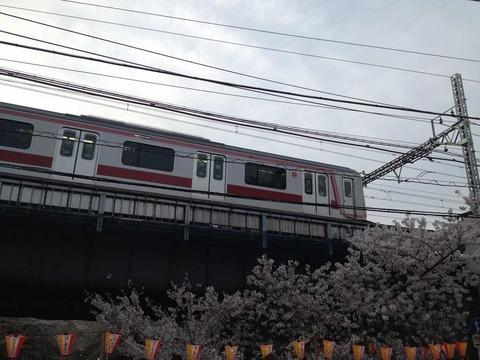 IMG_0830 目黒川s-